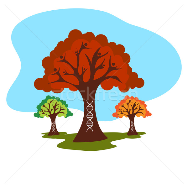 Genetic Family Tree History Stock photo © cteconsulting