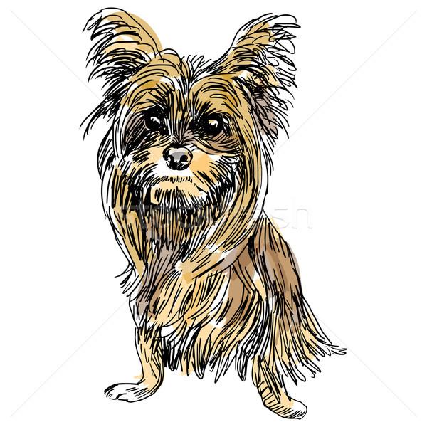 Yorkie Dog Sketch Stock photo © cteconsulting