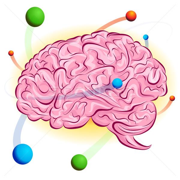 Atomi agy kép gondolkodik rajz rajz Stock fotó © cteconsulting