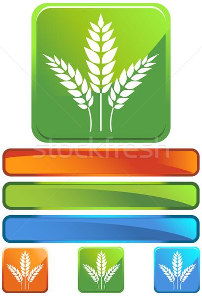 小麦 アイコン 画像 手 抽象的な 自然 ストックフォト © cteconsulting