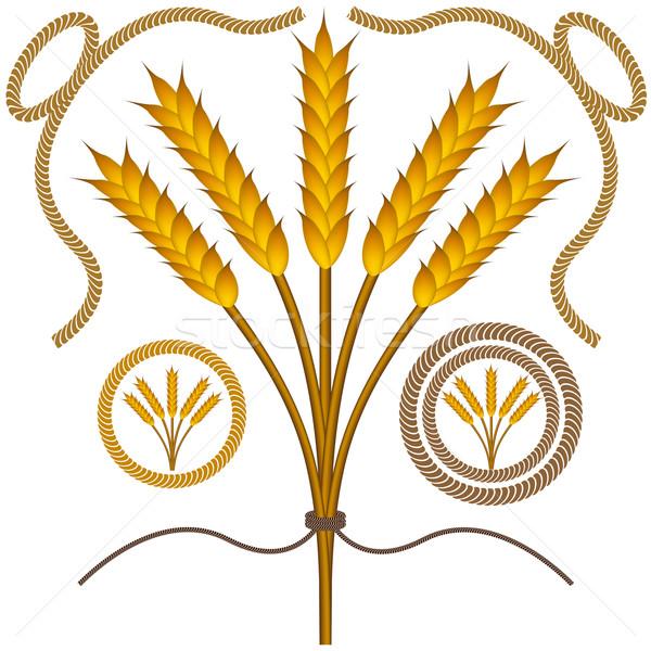 Roped Wheat Set Stock photo © cteconsulting