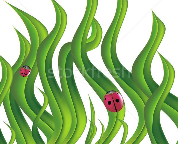 Katicabogarak dekoratív zöld természet terv háttér Stock fotó © cteconsulting