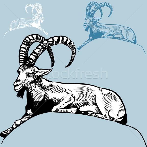 Widder Hand gezeichnet Bild Hand Natur Stift Stock foto © cteconsulting