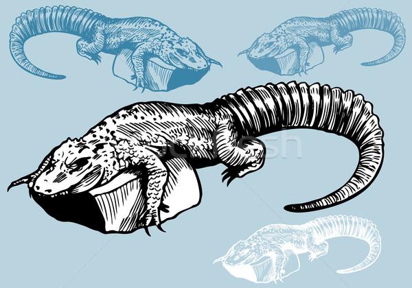 Alligator Drawing Stock photo © cteconsulting