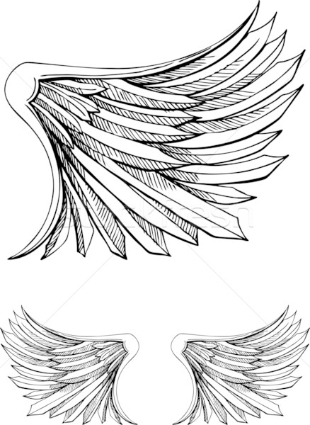 Hand Drawn Wings Stock photo © cteconsulting