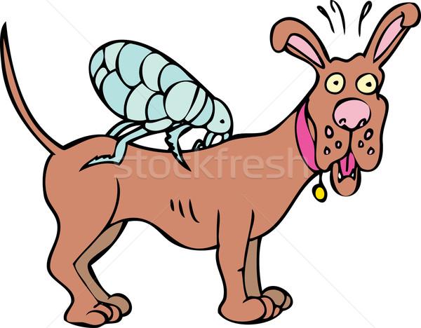 Dog with Flea Icon Stock photo © cteconsulting