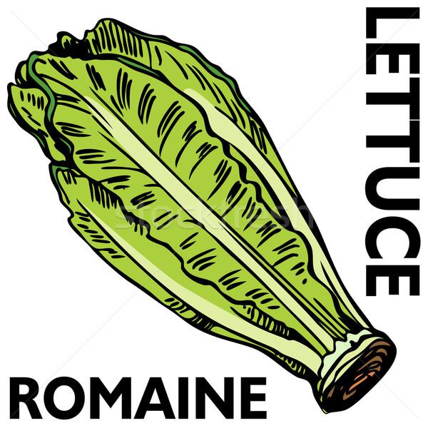 Romaine Lettuce Stock photo © cteconsulting