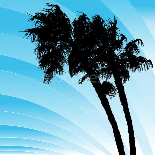 Windy Bending Palm Trees Stock photo © cteconsulting