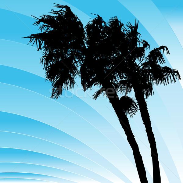 Ventoso palmeiras imagem palms árvores Foto stock © cteconsulting