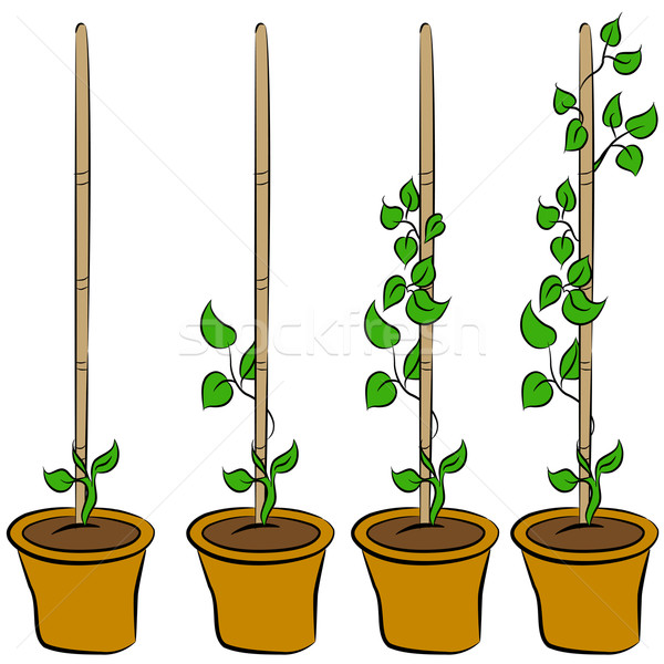 Growing Plant Stages Stock photo © cteconsulting