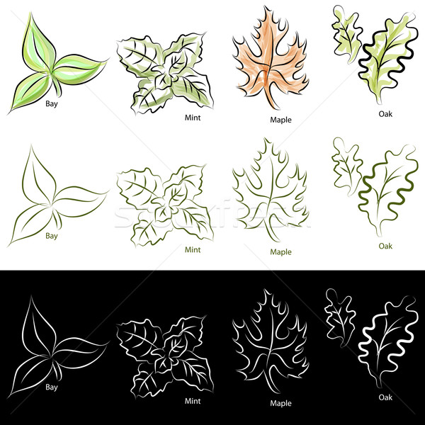 Elegant Line Leaf Set Stock photo © cteconsulting