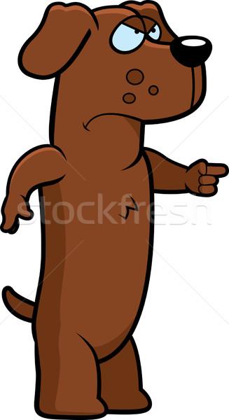 Angry Dachshund Stock photo © cthoman