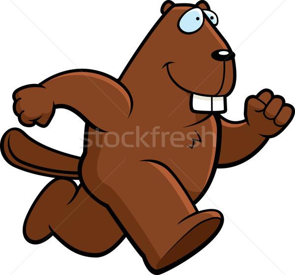 Beaver Running Stock photo © cthoman