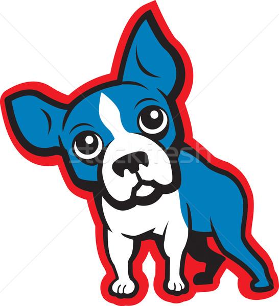 Boston terrier graphique illustration animal Photo stock © cthoman