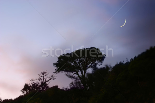tree on hill Stock photo © curaphotography