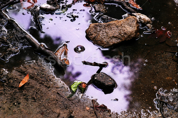 purple puddle Stock photo © curaphotography