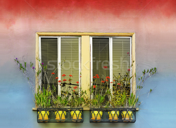 Flowerpots and window Stock photo © curaphotography