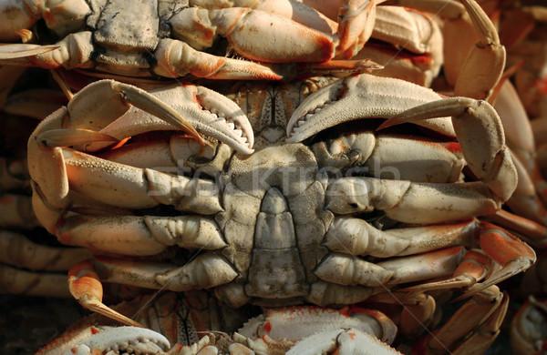 Crabs Stock photo © curaphotography