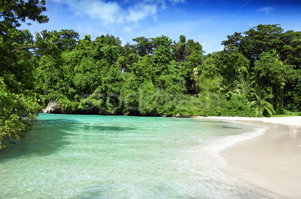 Stock photo: Tropical heaven