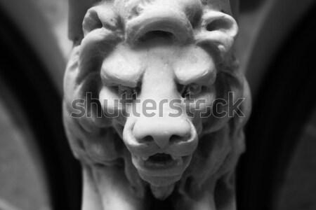 Lion head Stock photo © curaphotography