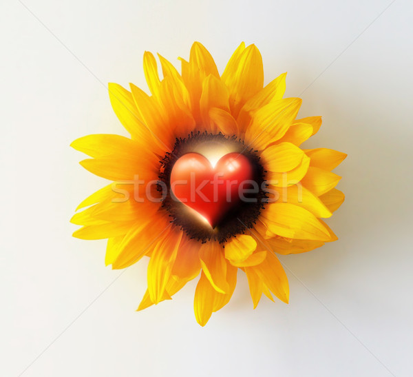 Heart Flower Stock photo © curaphotography