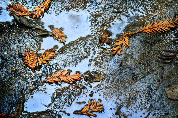 Leaf's in Puddle Stock photo © curaphotography