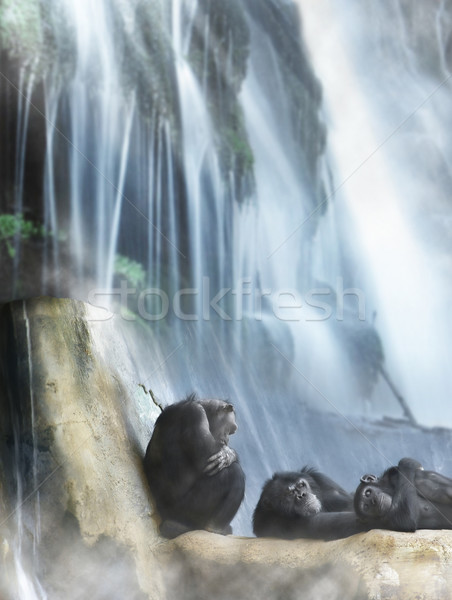 Resting primates and waterfall Stock photo © curaphotography