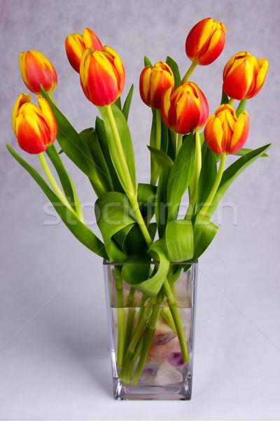 Bella arancione rosso tulipani grigio Pasqua Foto d'archivio © Cursedsenses
