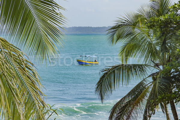 Untouched tropical beach in Bocas del Toro Panama Stock photo © Cursedsenses
