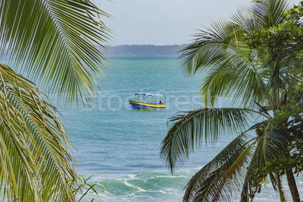 Tropikal plaj Panama yaz palmiye okyanus Stok fotoğraf © Cursedsenses