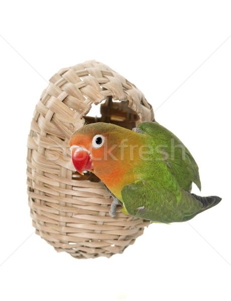 鳥の巣 カップル ボックス 動物 スタジオ 白地 ストックフォト © cynoclub