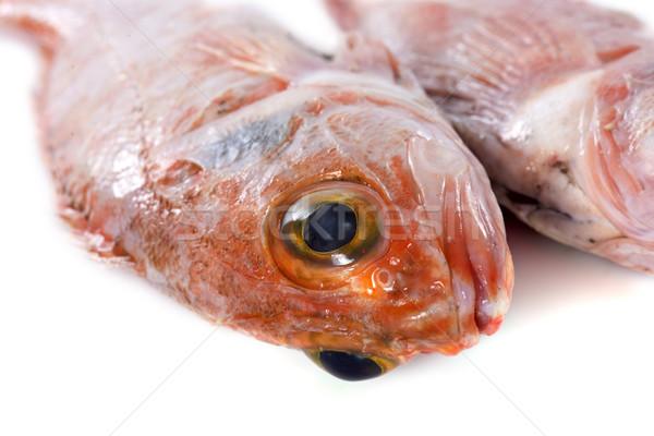 ocean perch Stock photo © cynoclub