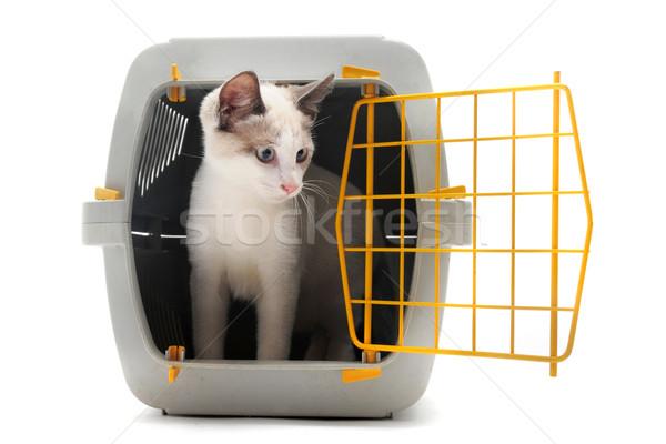 Kiscica díszállat macska zárva bent izolált Stock fotó © cynoclub