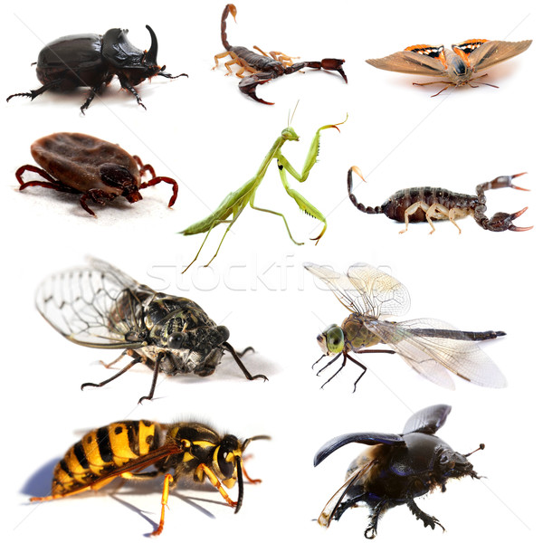 insects and scorpions Stock photo © cynoclub