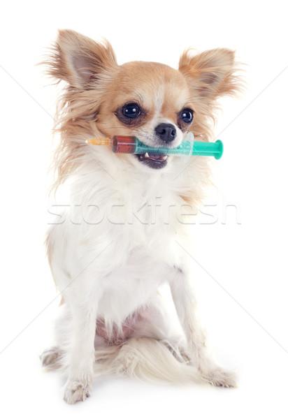 Jeringa blanco perro médico boca cachorro Foto stock © cynoclub