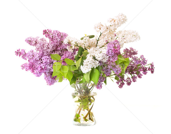 Virágcsokor orgona fehér virág tavasz Stock fotó © cynoclub