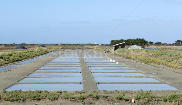 salt marsh Stock photo © cynoclub