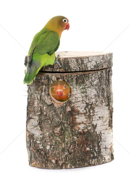 鳥の巣 ボックス 卵 鳥 動物 スタジオ ストックフォト © cynoclub