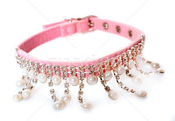 collar for dog Stock photo © cynoclub