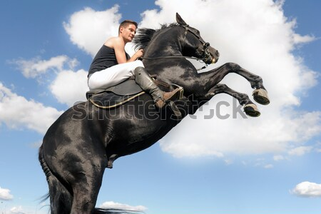rearing horse in the water Stock photo © cynoclub