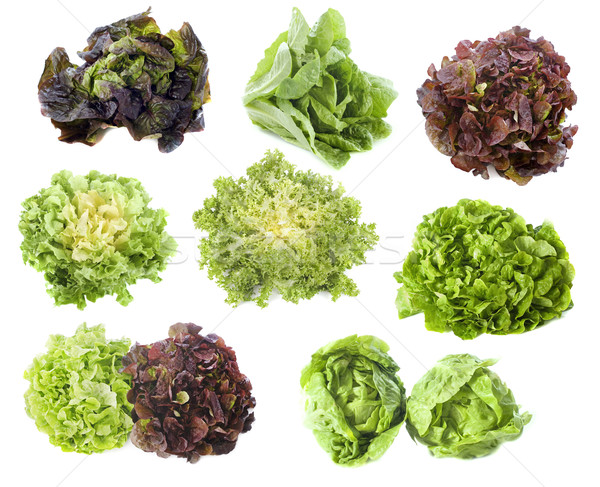 varieties of salads Stock photo © cynoclub