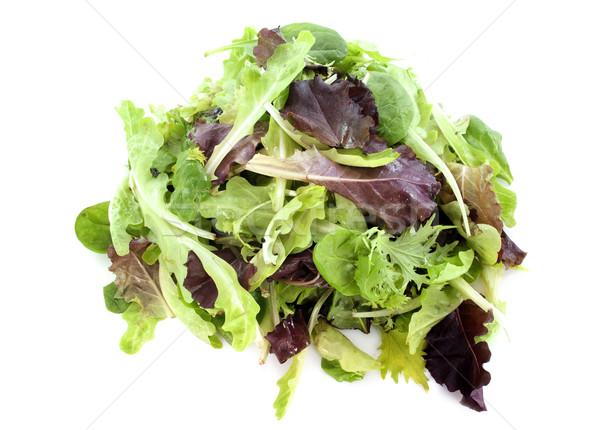 mesclun salad Stock photo © cynoclub