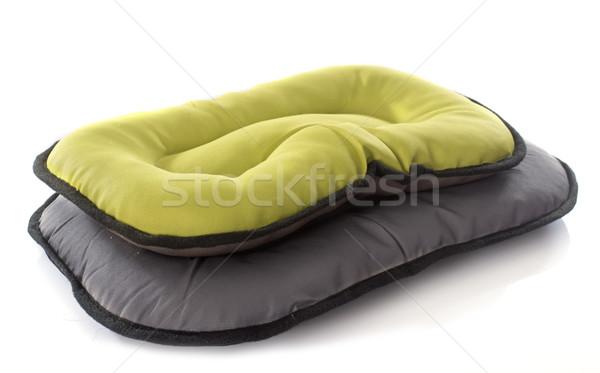 dog bed Stock photo © cynoclub