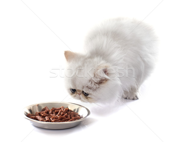 Manger chaton blanche alimentaire chat studio Photo stock © cynoclub