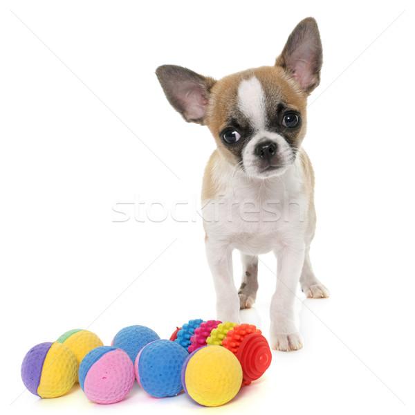 ストックフォト: 子犬 · ショートヘア · 犬 · ボール · 白 · 動物