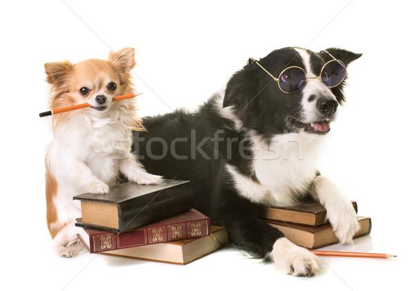 Perros escuela blanco pluma lectura negro Foto stock © cynoclub