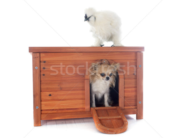 hen house  Stock photo © cynoclub