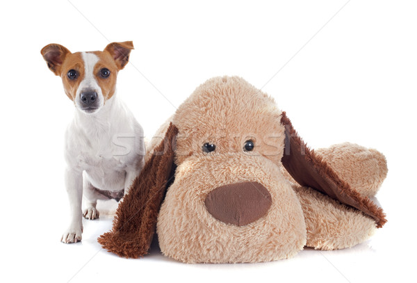 jack russel terrier and toy Stock photo © cynoclub