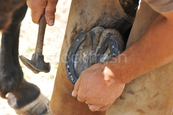 farrier Stock photo © cynoclub
