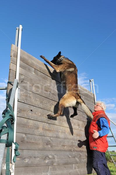 Eğitim polis köpek eğitim köpek Stok fotoğraf © cynoclub